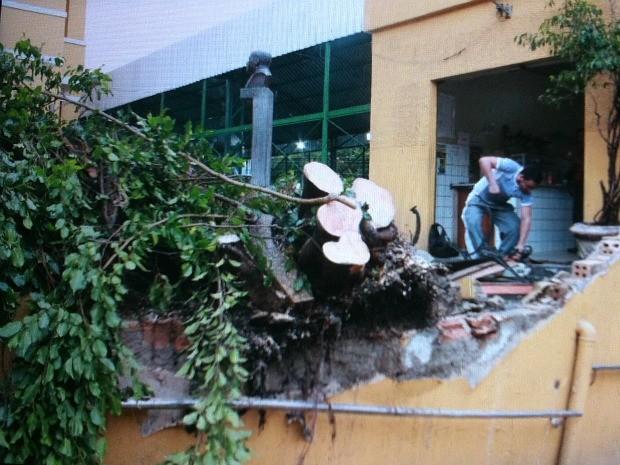Árvore caiu em escola do Centro de Manaus (Foto: Mônica Dias/G1 AM)