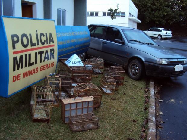 Polícia apreende 14 pássaros silvestres em Varginha e Elói Mendes (Foto: Polícia Militar do Meio Ambiente)