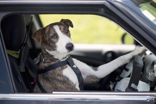 Brincadeira visa popularizar adoção de animais abandonados (Foto: AFP)