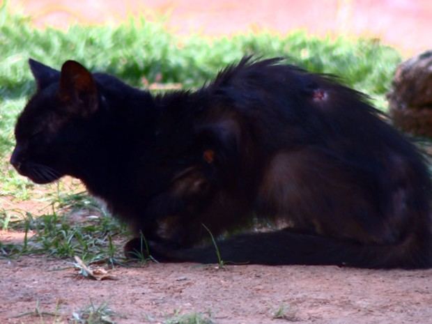 Gato com sinais de maus-tratos é acolhido em ONG de Campinas (Foto: Reprodução EPTV)