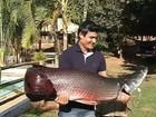 Típico da Amazônia, peixe 'gigante' é fisgado no rio Grande, em Indiaporã