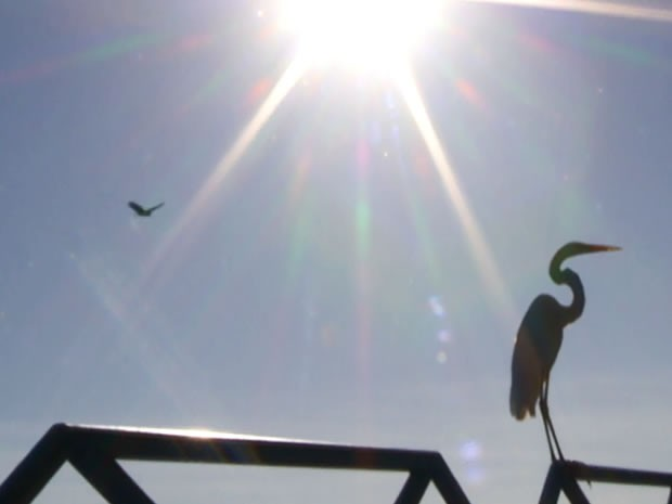 Garças também chamam atenção dos visitantes (Foto: Reprodução/TV Tapajós)