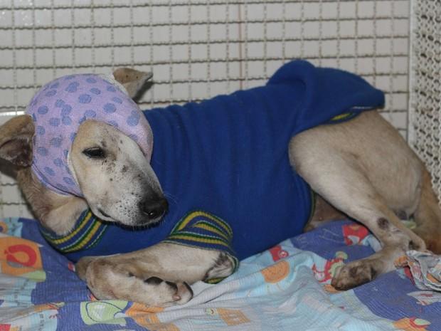 Cão que foi espancado em Cachoeiro de Itapemirim, no Espírito Santo (Foto: Divulgação/ Prefeitura Municipal de Cachoeiro de Itapemirim)