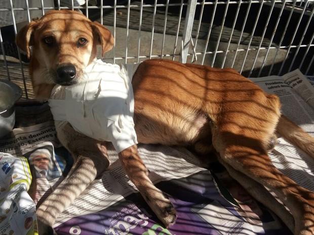 Cachorro é baleado em troca de tiros no Rio e pode ter que amputar a pata (Foto: Suipa/Arquivo Pessoal)