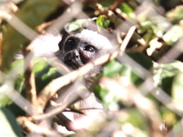 Diretor do zoológico acredita que mais filhotes podem nascer no local.  (Foto: Divulgação/ Ricardo Ursulino)