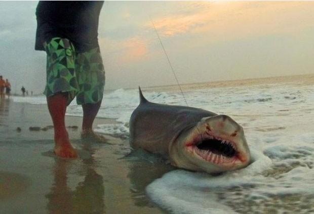 Tony Cutugno fisgou um tubarão de 2,1 metros com vara de pescar. (Foto: Reprodução)