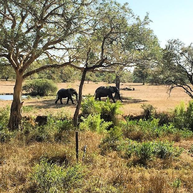 Giovanna Ewbank posta foto de elefantes na África do Sul (Foto: Reprodução/Instagram)