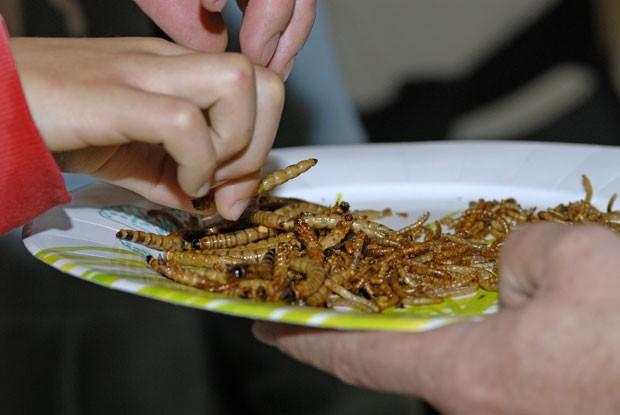 Degustação de larvas fritas na França (Foto: Denis Bringard/Biosphoto/AFP)
