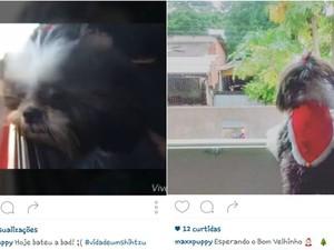 Max na 'bad' na janela do carro e á espera do Papai Noel (Foto: Reprodução Instagram)