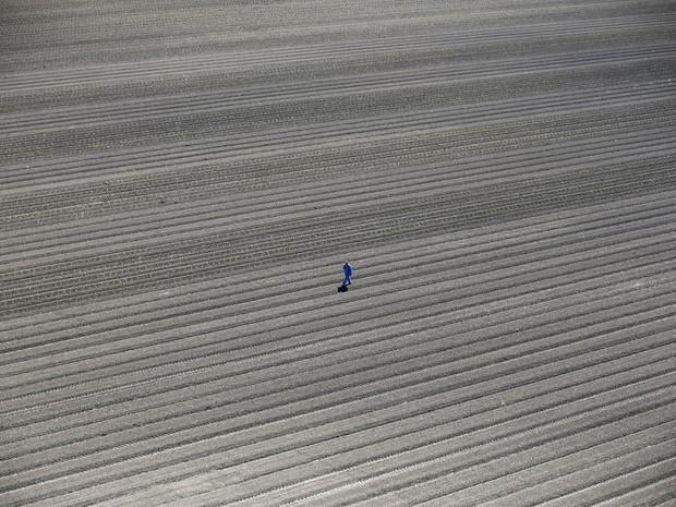 Um trabalhador caminha em um campo agrícola de Los Banos, na Califórnia. Foram aprovadas as primeiras regras de cortes no uso da água para lidar com a seca na região. Usuários urbanos serão os mais atingidos, mesmo representando apenas 20% do consumo (Foto:  Lucy Nicholson/Reuters)