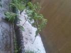 Chuva de granizo atinge o município de Guaçuí, no Sul do ES