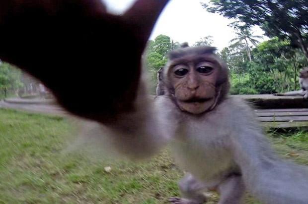 Amado G1 - Macaco mexe em câmera de turista e faz 'selfie perfeita' na  DR67