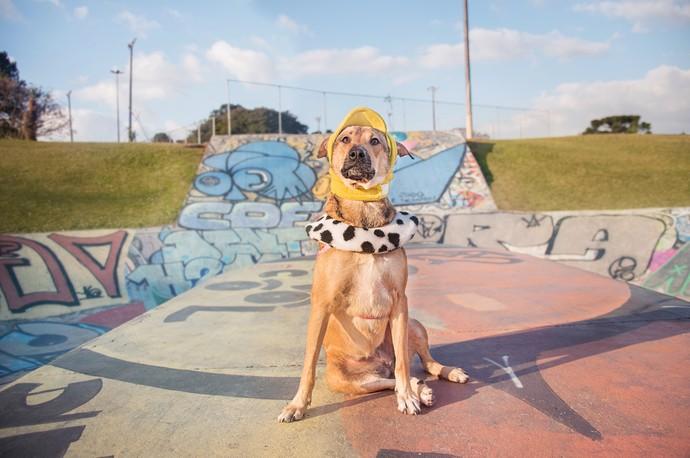 As fotos ajudam os cachorros a serem adotados mais rápido  (Foto: Joana Ferreira Alves / Calliandra de Souza Anderle / RPC)