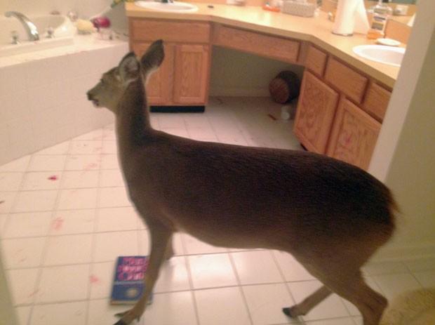 Mulher trancou veado no banheiro após animal invadir sua casa (Foto: Galloway Police Department/AP)