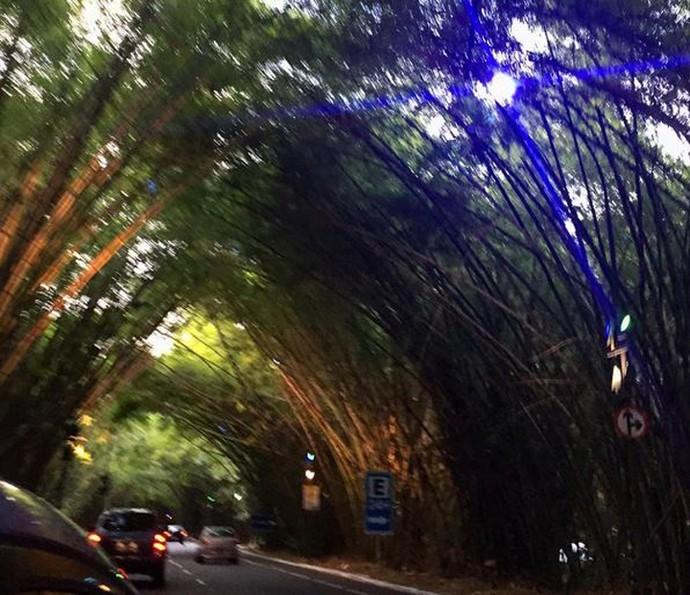 Carol Castro postou nas redes sociais sua chegada a Salvador, de onde pegou um carro para ir para o interior da Bahia, onde acontecem as gravações (Foto: Arquivo Pessoal)