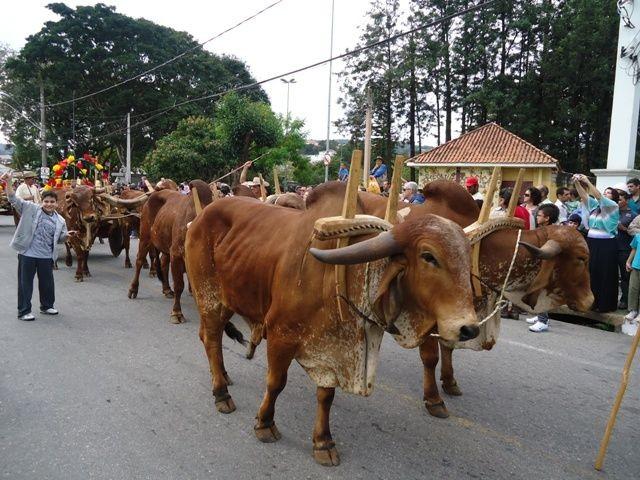 Desfile das carroças puxadas por bois foi suspenso (Foto: São Roque Notícias)