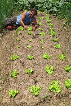 Agricultor Mauri mostra plantação de alface com o solo coberto, técnica para manter terra úmida (Foto: Gabriela Gasparin/G1)