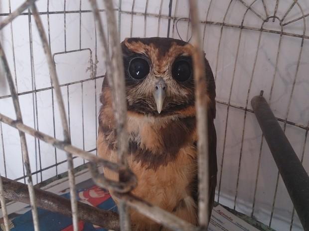 Coruja está entre os animais que serão expostos no local (Fot Gabriela Machado/RBS TV)