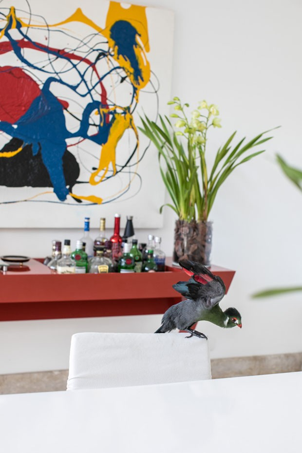 Casa tem arquitetura pensada para acomodar mais de 40 animais (Foto: Deco Cury)