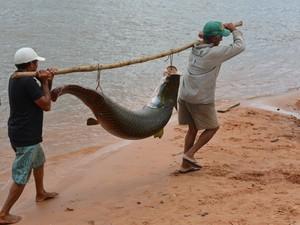 Pescadores precisaram da ajuda de cinco pessoas  (Foto: Ana Paula Chaves/Vc no G1)