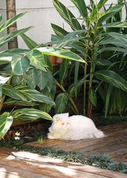 Gato persa em quintal com folhas (Foto: Evelyn Müller/Editora Globo)