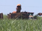Produção de etanol em MT deve cair mais de 30% na nova safra, diz Conab