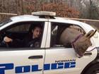 Burro foge e ganha 'carona' em viatura da polícia nos EUA
