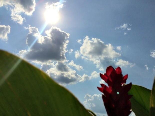 Apesar de chuva rápida, sol volta a brilhar na tarde de segunda-feira em Campo Grande (Foto: Isabela Cavalcante/G1 MS)