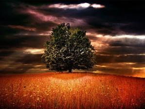 papel de parede árvore