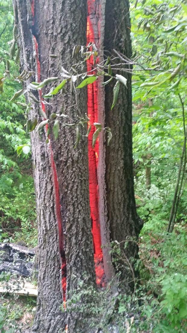 Foto incrível de árvore quase partida ao meio por raio vira hit na web (Foto: Reprodução/Reddit/Thunderbolt505T)