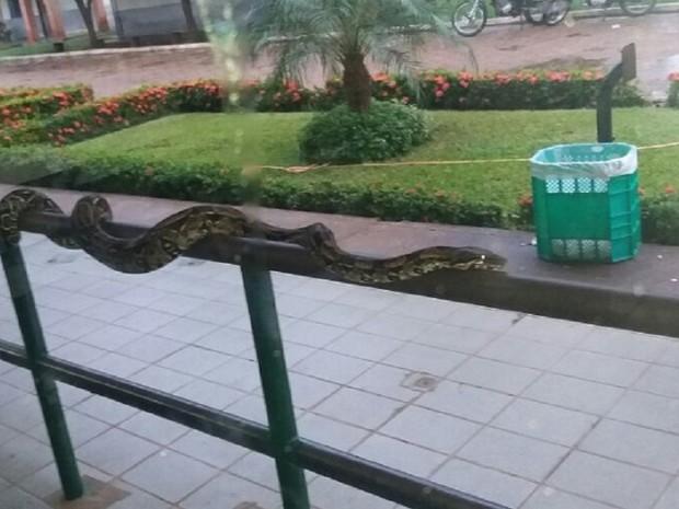 Estudantes ficaram surpresos com o tamanho e a beleza da jiboia (Foto: Folha do Bico/Divulgação)