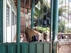 Por falta de repasse, ONG que cuida de 400 animais corre risco de fechar