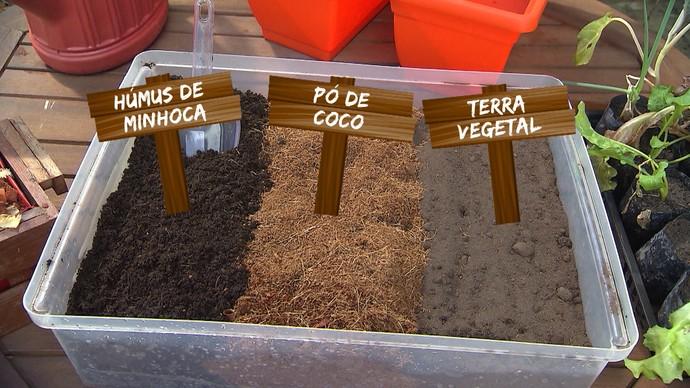 Mini-horta em casa (Foto: TV Bahia)