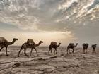 A jornada ameaçada de extinção no 'lugar mais quente do mundo'