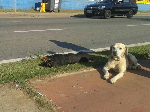 Animal ficou ao lado de cadela atropelada (Foto: Rosimara Ferreira/Arquivo Pessoal)