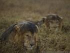 Visões premiadas da vida selvagem