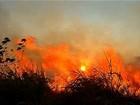 Incêndio destrói plantações de cana-de-açúcar e pastagens em MT