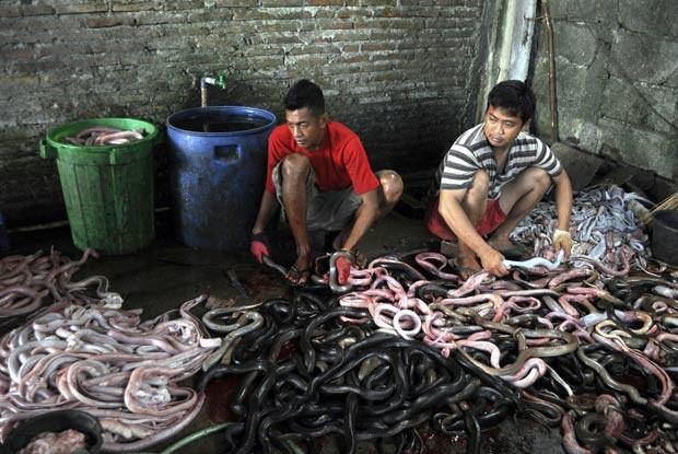 Açogueiros retiram a carne, vesícula biliar e outras partes das cobras para depois serem entregues a restaurantes. (Foto: Slamet Riyadi/AP)