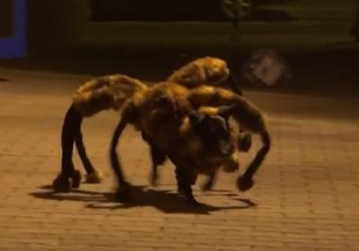 planeta_bicho_aranha_cachorro (Foto: Reprodução / Youtube)