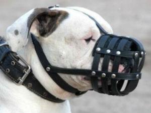 Item não deve atrapalhar respiração do pet (Foto: Divulgação)