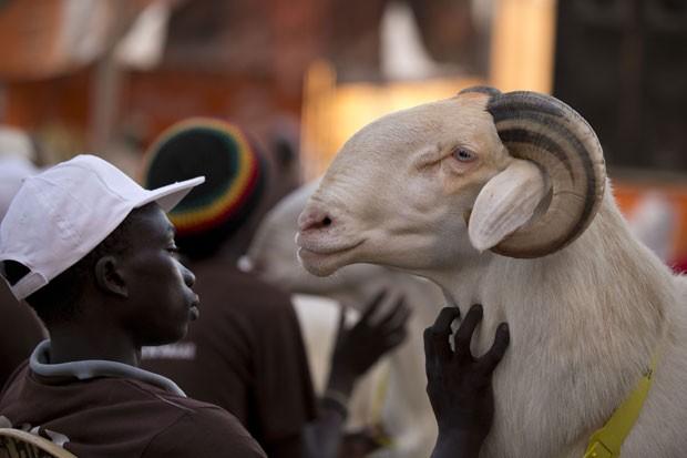 Dogo Ndiaye acaricia o carneiro 'Papis General', um dos participantes da competição. (Foto: Rebecca Blackwell/AP)