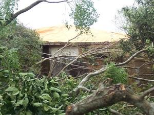 Árvores foram derrubadas pelo tornado em São Gabriel (Foto: Glenio de Bairros/arquivo pessoal)