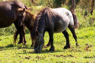 Fazenda investe na criação de pequenos animais (Foto: Reprodução TV Fronteira)