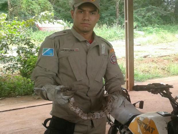 Jiboia foi capturada em tanque de motocicleta em Ladário (Foto: Corpo de Bombeiros/Divulgação)