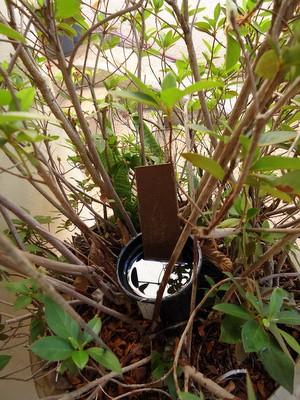 Armadilha para o mosquitop da dengue em Santa Bárbara d'Oeste  (Foto: CCZ de Santa Bárbara/Divulgação)