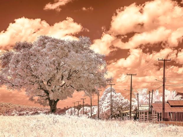 Fotografias foram feitas com câmera especial que só capta em infravermelho (Foto: Adilson Brilhante/Arquivo Pessoal)