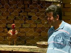 Seu Zezão quis passar a galinha pra frente quando achou ela estranha em Caldas, MG (Foto: Tarciso Silva / EPTV)