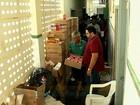 Santana do Acaraú, no Ceará, vai incinerar três toneladas de remédios