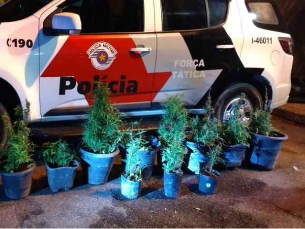 Polícia apreendeu nove mudas de maconha (Foto: Divulgação/Polícia Militar)
