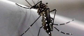 São José confirma quatro novos casos do vírus da zika (Paulo Whitaker/Reuters)